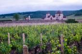Bourgogne vineyard — Zdjęcie stockowe
