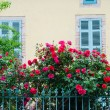 Beautiful red roses — Stock Photo #61431585