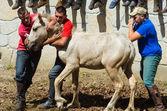Wild Horses — Foto de Stock