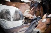 Wild horses and men — Stock Photo