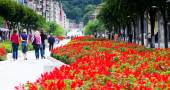 Jardim vermelho — Fotografia Stock