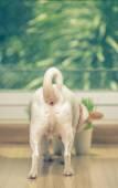 Backside of the little dog — Stock Photo