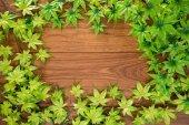 Maple leaves frame on wood background — Stock Photo