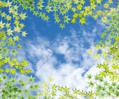 Maple leaves frame with blue sky background — ストック写真