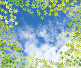 Maple leaves frame with blue sky background — Foto de Stock