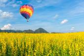 Hot air balloon over yellow flower fields against blue sky — Stock Photo