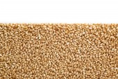 Wheat pile heap with copy space — Stock Photo