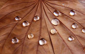 Low key image of Dry leaf with dewdrops on wooden background. selective focus — Stock Photo