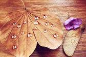 Low key image of Dry leaf with dewdrops on wooden background. selective focus. — Stock Photo