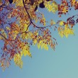 Colorful tree foliage in the autumn. Autumn leaves sky background. image is retro filtered — Stock Photo #57708271