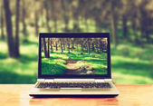 Laptop over wooden table outdoors and blurred background of trees in the forest — Stock Photo