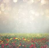 Abstract photo of wild flower field and bright bokeh lights. cross proccess effect — Stock Photo