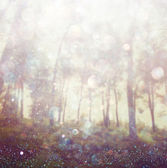 Abstract photo of light burst among trees and glitter bokeh lights. image is blurred and filtered . — Zdjęcie stockowe