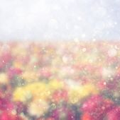 Abstract photo of wild flower field and bright bokeh lights. — Stok fotoğraf