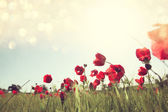 Low angle photo of red poppies against sky with light burst. — Stock Photo