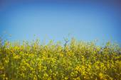 Low angle photo of flowers against crisp blue sky — Stock Photo