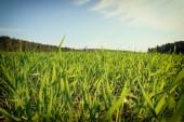 Afbeeldingsveld groen gras en bomen in bos. afbeelding is retro afgezwakt — Stockfoto