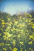 Low angle photo of flowers against crisp blue sky. retro filtered image — Stock Photo