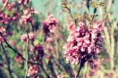 Image of Spring Cherry blossoms tree. abstract background. dreamy concept — Stock Photo