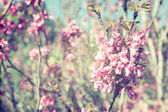 Double exposure of Spring Cherry blossoms tree. abstract background. dreamy concept with glitter overlay — Stock Photo