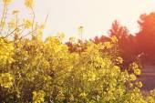 Wildflower background. Instagram effect — Stockfoto