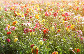 Photo of field of flowers , image is vintage style filtered. selective focus — Stock Photo