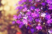 Pink and purple flowers bloom, selective focus — Stock Photo