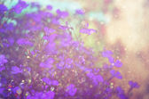Pink and purple flowers bloom, glitter overlay — Stock Photo
