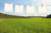 Old polaroid photo frames hanging on a rope in front of open field landscape background — Stock Photo