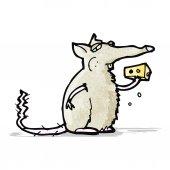 Cartoon rat eating cheese — Stock Vector