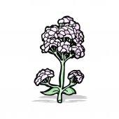 Wild flowers cartoon — Stock Vector