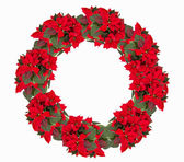 Christmas wreath from poinsettia isolated on white  — Stock Photo