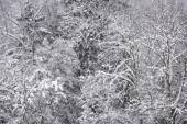 Snow covered forest. — Stock Photo