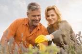Happy Mature Couple Gardening — Stock Photo
