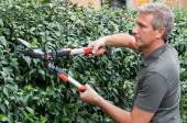 Gardener Cutting Hedge With Pincer — Stock Photo