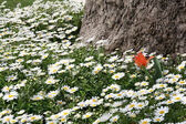 Red tulip among white flowers under a big tree — Foto de Stock