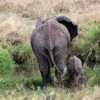 Elephant mother takes baby to the water pond — Stock Photo #77543596
