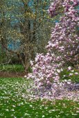 Magnolia and Grass — Stock Photo
