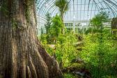 Inside Greenhouse — Stock Photo