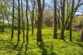 Spring Woodlands — Stock Photo