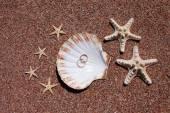 Starfish on the beach — Stock Photo