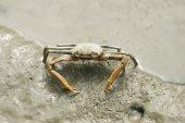 Portrait of a Spider Crab — ストック写真