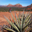 Oak Creek Canyon Arizona — Stock Photo #54680881