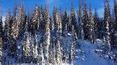 Gäddor skogen på vintern — Stockfoto