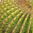 Cactus is a plant that needs very little water — Stock Photo #56822513