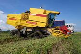 收割成熟的水稻对稻田 — 图库照片