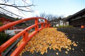 Yellow leaves on the bridge in Shimogamo-jinja Shrine Kyoto — Stock Photo
