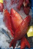 Star grouper fish — Stock Photo