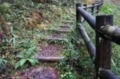 Деревянный ствол ступает в осенний лес — Стоковое фото