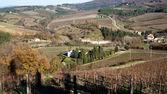 Panoramic landscape of Wineyard — Stock Photo